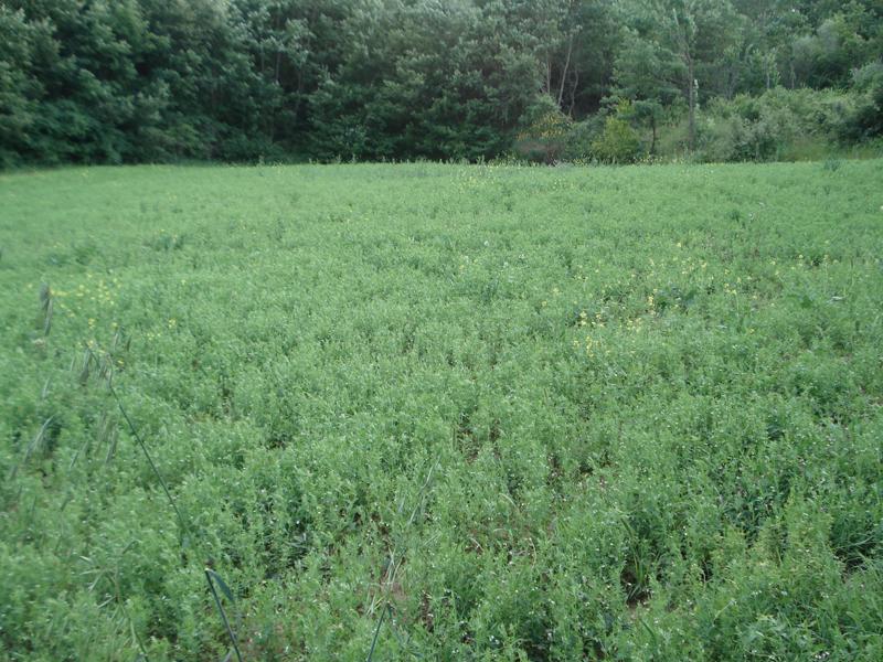 campo lenticchie